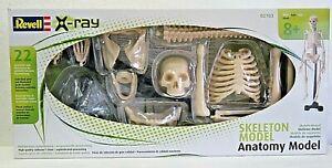 Revell 2103 plastic model kit MODEL SKELETON Anotomy Model 22 parts 1:4 New