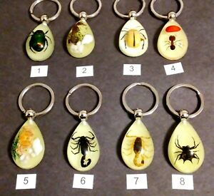 Key Chain--Real Insects Scorpion, Crab, Beetle, Bugs-Glow in the Dark (Choice)
