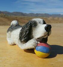 Cute Black and White Cocker Spaniel Pup Play with a Beach Ball.