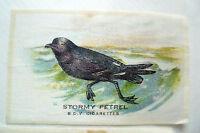 B.D.V. Cigarettes Silk (Bird Silk)- BIRD STORMY PETREL Original Printed Silk