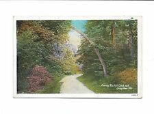 LEANING TREE MILL CREEK PARK YOUNGSTOWN OHIO O'CONNORS WHITE BORDER POSTCARD
