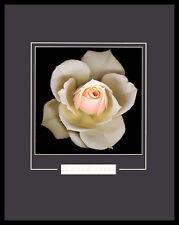 Harold Feinstein Peach Rose poster immagine stampa d'arte nel quadro in alluminio nero 50x40cm