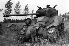 WW2 Photo WWII Destroyed  M4 Sherman Tank Market Garden  World War Two/ 3136
