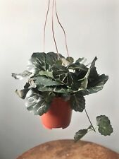Hanging Potted Artificial Trailing Ivy Plant. Green Faux Houseplant Saxifraga