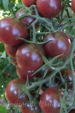 10 graines de tomate Cerise Chocolat -Chocolate Cherry heirloom tomato seeds bio
