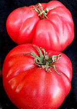 """V.R. Moscow Tomato *Heirloom* (100 Seed's) """" FREE SHIPPING"""" <Non-GMO>"""