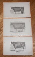 Lot of 3 Antique 1865 Prints of Devon Cattle Cow & Bull Printed in 1865