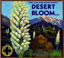 Redlands San Bernardin Desert Bloom Grapefruit Citrus Fruit Crate Label Print