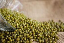 3000 seeds (100g) Mung Bean Seeds GROW or Sprouting Fresh Organic germination