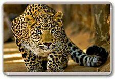 Leopard Fridge Magnet 03