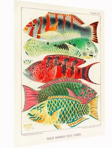 Vintage print Art Australia fish Barrier Reef painting Framed Canvas not poster