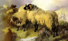 Dream-art Oil painting george w. horlor - highland scene with sheep and grouse