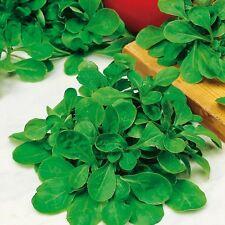 Kings Seeds - Lambs Lettuce Corn Salad - 450 Seeds