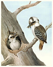 Laughing Kookaburra by Neville W Cayley High Quality Canvas or Art Paper Print