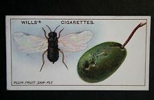 Plum Fruit Saw-Fly    Vintage  Colour Card  VGC