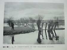 ANTIQUE PRINT C1904 FLY FISHING LEDGER FISHING POLLARDED WILLOWS SPORT VINTAGE