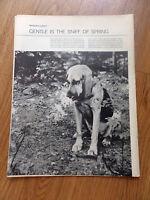 1966 Magazine Photo Article Ad  Bloodhound Dog  O'Neills Charlottesville VA