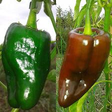MULATO ISLENO (Messico) 10 SEMI peperoncino grande carnoso saporito per ripieno