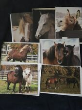 Assorted Horse Blank Note Cards