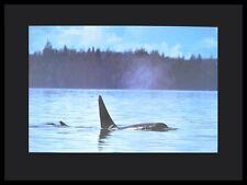 Image Bank Killer Wal Poster Bild Kunstdruck mit Alu Rahmen in schwarz 60x80cm