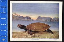 GEOGRAPHIC NORTHERN MAP TURTLE  - 1899 Nature Print PLUS Bonus