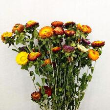 1 Bouquet Chrysanthemum Branch Daisy Dried Flower DIY Wedding Home Decor