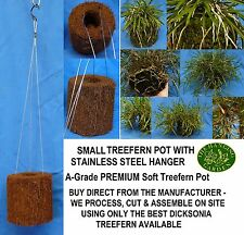 THG - Orchid Treefern Pot SMALL W/HANGER Garden Landscape NEPENTHES CARNIVOROUS