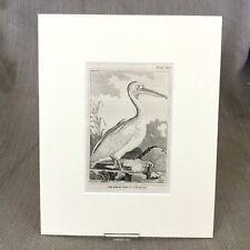 Great White Pelican Bird Antique Engraving Print Buffon Natural History 1812