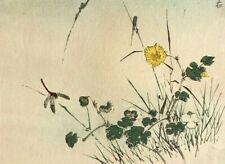 Estampe Japonaise Ancienne - Fleurs Jaune, Libellule, Insecte c. 1890