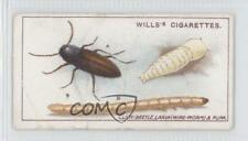 1914 Wills Garden Life #2 Click-Beetle Larva (Wire-worm) and Pupa Card a8x