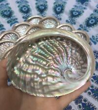 1x Large Abalone Shells 12-15cm (Haliotis Rubra) Perfect For Smudging