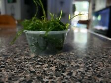 2oz cup of Java Moss,Low Light Freshwater Plant,BUY TWO GET ONE FREE!