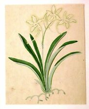 ANGLO CHINESE FLOWERS (2) W/COL C1860