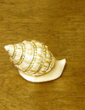Jeweled Enameled Trinket Box KC4177 SEA SNAIL NEW in Box From Retail Store