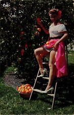Postcard Risque Sexy Florida Oranges Vintage A5