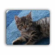Kitten On Carpet Computer Mouse Pad For Home and Office