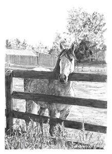 Horse Lover Ranch Pencil Drawing Sketch Art Artwork Cavalia PRINT - Brandy Woods