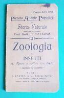 Animali - Piccolo atlante popolare di Storia Naturale - Zoologia - Insetti