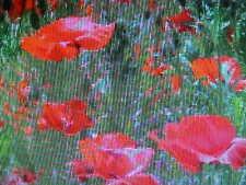 """1/4- Pound Red """"Dwarf"""" California Poppy 57,500 Seeds"""