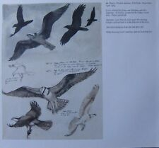 Beau Vintage Oiseau Impression~Osprey~