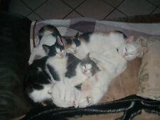 aus Tierheilpraxis; Kräuterwurmkur für Katzen und Kitten (bewährte Mischung)