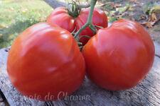 5+ graines de tomate rare ancienne Morado de Aretxabaleta heirloom tomato seeds