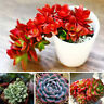 100PCS Decor Succulents Seeds Potted Rare Plants Flower Bonsai Home Gardenz