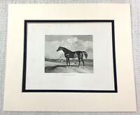 1843 Antique Horse Print SHAKESPEARE Thoroughbred Arab Equestrian Engraving