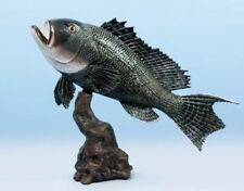 "Taxidermy Sea Bass / Statue 20"" Stunning Fish Mount"