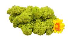 Muwse Islandmoos Köpfe V 4-12cm 25g Frühlingsgrün handgereinigt Moos Deko