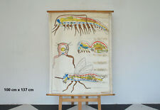 More details for vintage educational school poster old canvas teaching diagram - free postage