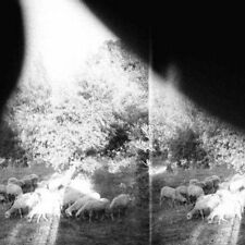 Asunder, Sweet and Other Distress [Slipcase] by Godspeed You! Black Emperor (CD, Mar-2015, Constellation)
