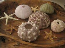 Sea Urchin And Mini Starfish Collection, Beach Decor, Nautical, Starfish Supply