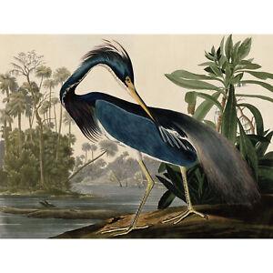 Audubon Birds Louisiana Heron Painting Wall Art Canvas Print 18X24 In